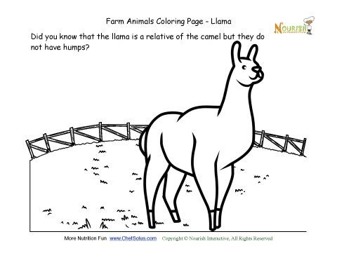 Farm Animals Coloring And Fun Fact Page Learn About The Llama