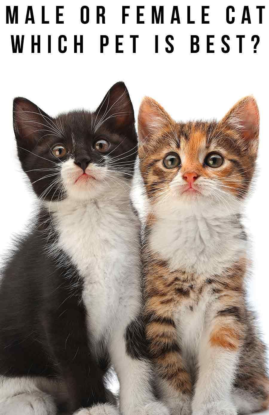 Pin On Cat Help And Advice From The Happy Cat Site