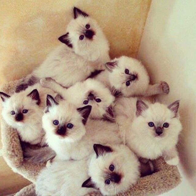 That's a lot of little kitties. They're adorable.