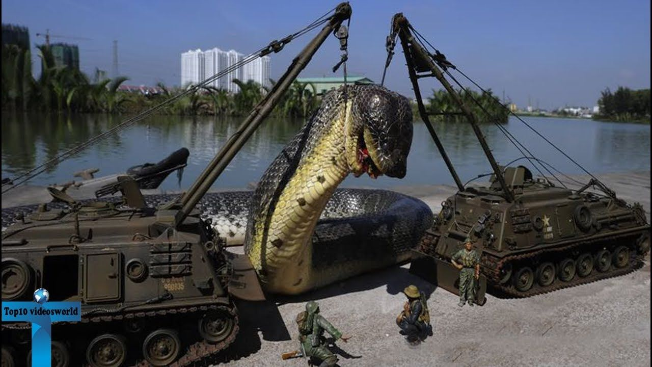 Top 7 Biggest Snakes In The World Videos Biggest Snakes Ever Found