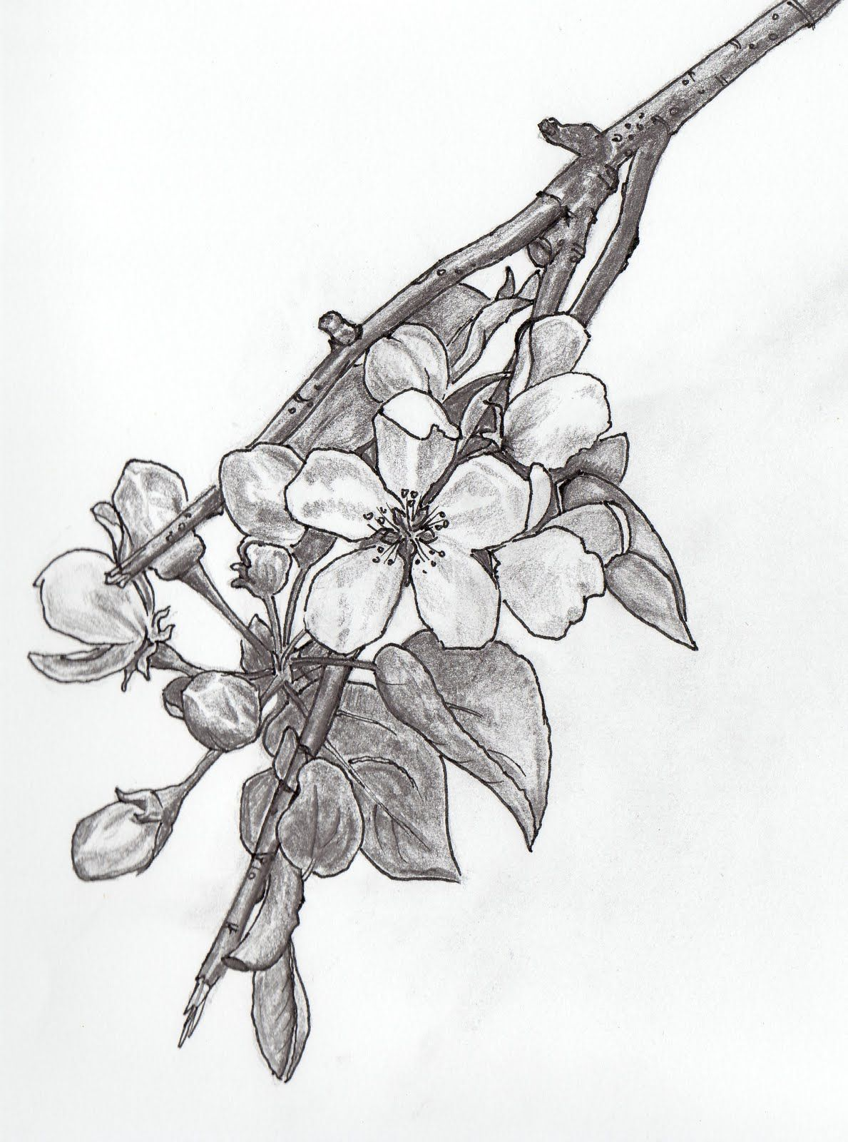 this is an apple blossom which means promise i d get this to