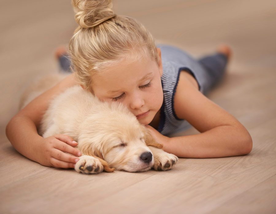 Customer Reviews Of Our Pet Friendly Flooring Pets Sleeping Dogs Best Pet Dogs