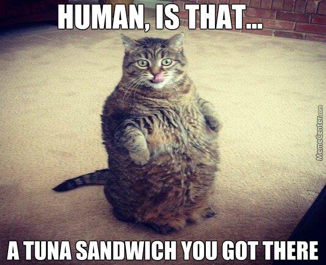 be526b79321c9bffac6140ce5f0e6708 meme center largest creative humor community meme, fat cat