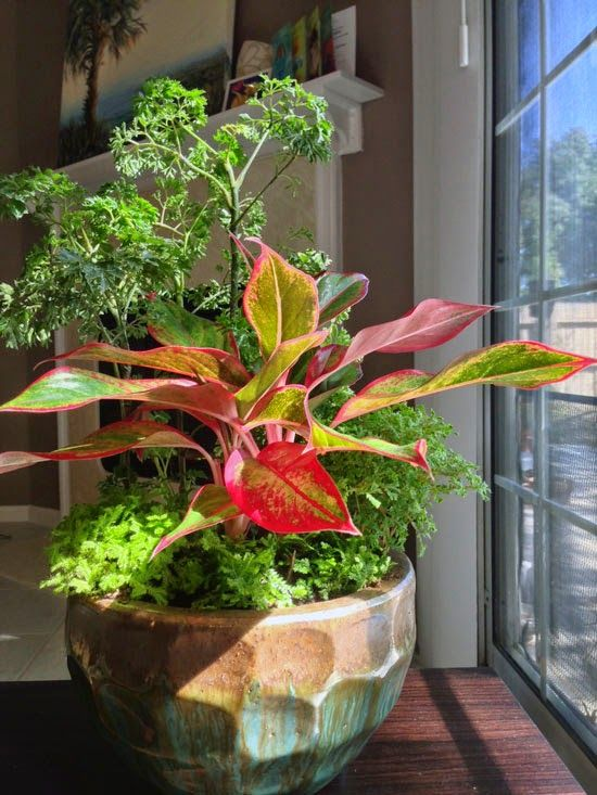 The Rainforest Garden: How to Combine Houseplants for Easy ... on