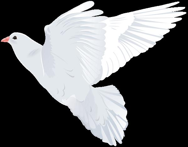 White Dove Transparent Png Clip Art Image Art Images Art White Doves