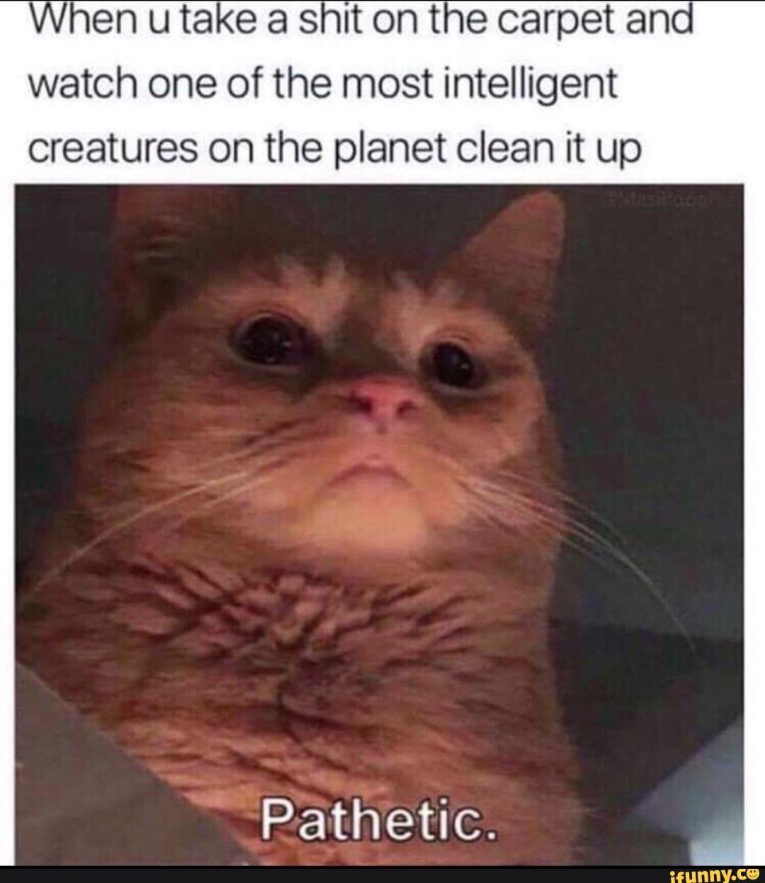Pin On Ifunny Tumblr Memes
