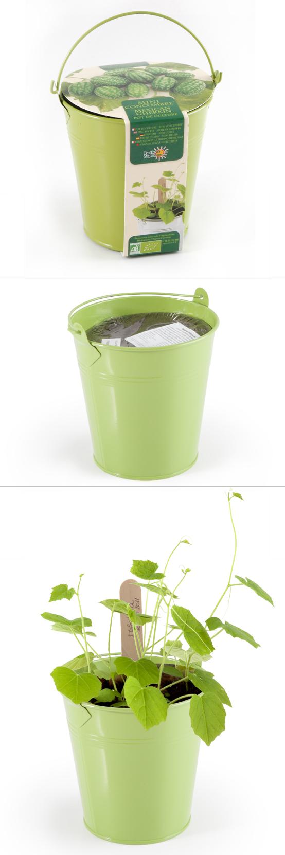 Graines de Mini-concombres en pot de culture zinc ...
