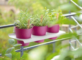31+ Jardiniere basilic persil ciboulette ideas in 2021