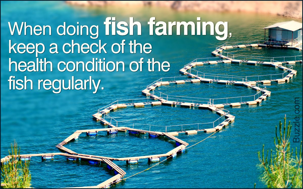 Fish Farming Techniques | Farming techniques, Fish farming ...