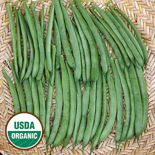 Phaseolus Vulgaris Climbing French Green Bean Beans 400 x 300
