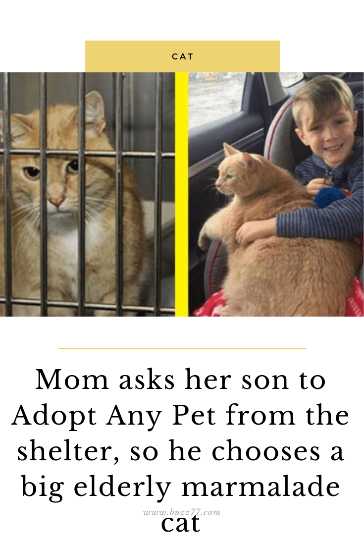 Mom Asks Her Son To Adopt Any Pet From The Shelter So He Chooses A Big Elderly Marmalade Cat En 2020