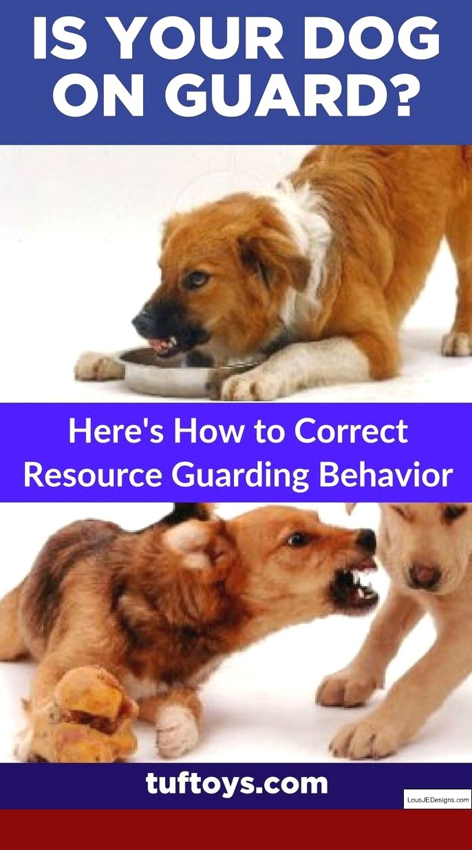 Pin On Dog Training Tips