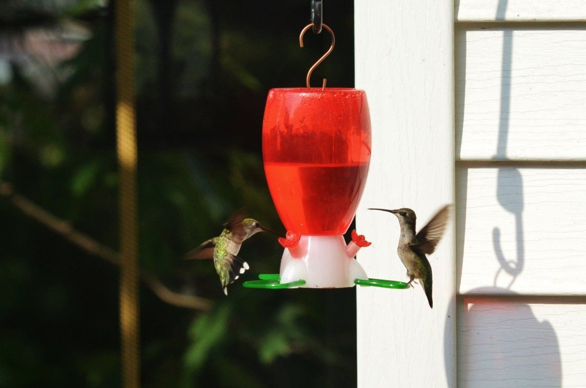 Looks like the fall migration of rubythroated
