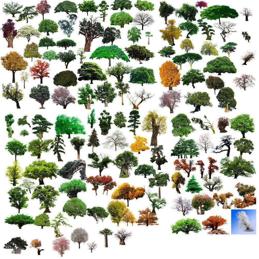 Photoshop PSD Landscape Tree 7 – CAD Design