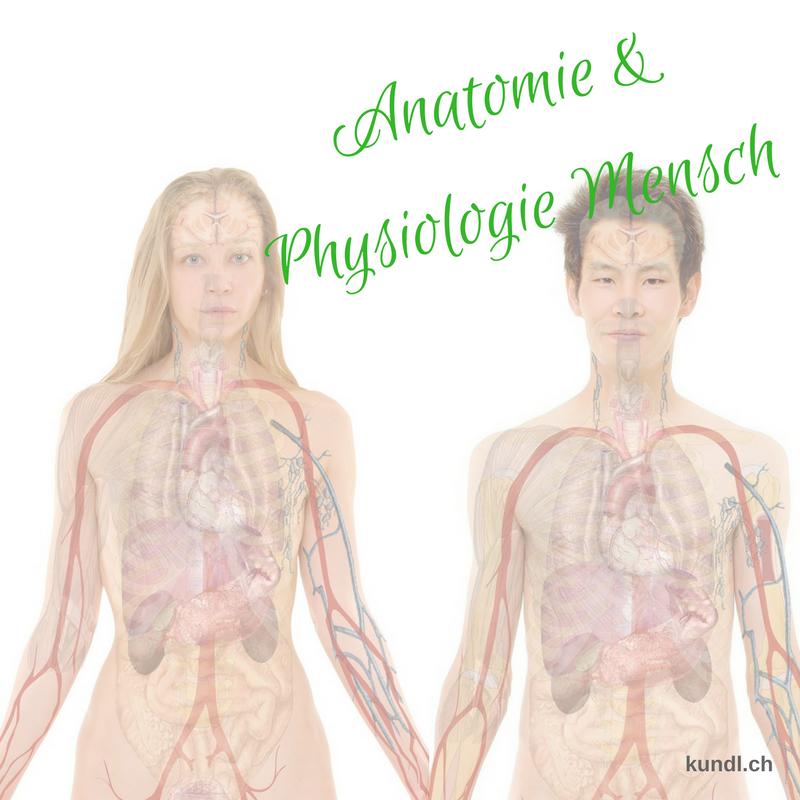 Für alle die sich für die Anatomie und Physiologie des Menschen ...