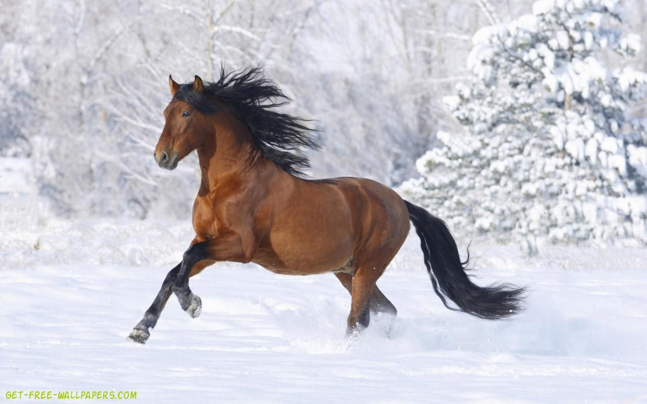 Top Wallpaper Horse Winter - be56a7f3a4930936638c4da0f3973c95  Graphic_394274.jpg