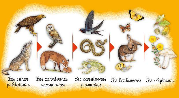 1jour1actu la chaine chaine et activit - Animal qui mange les fourmis ...