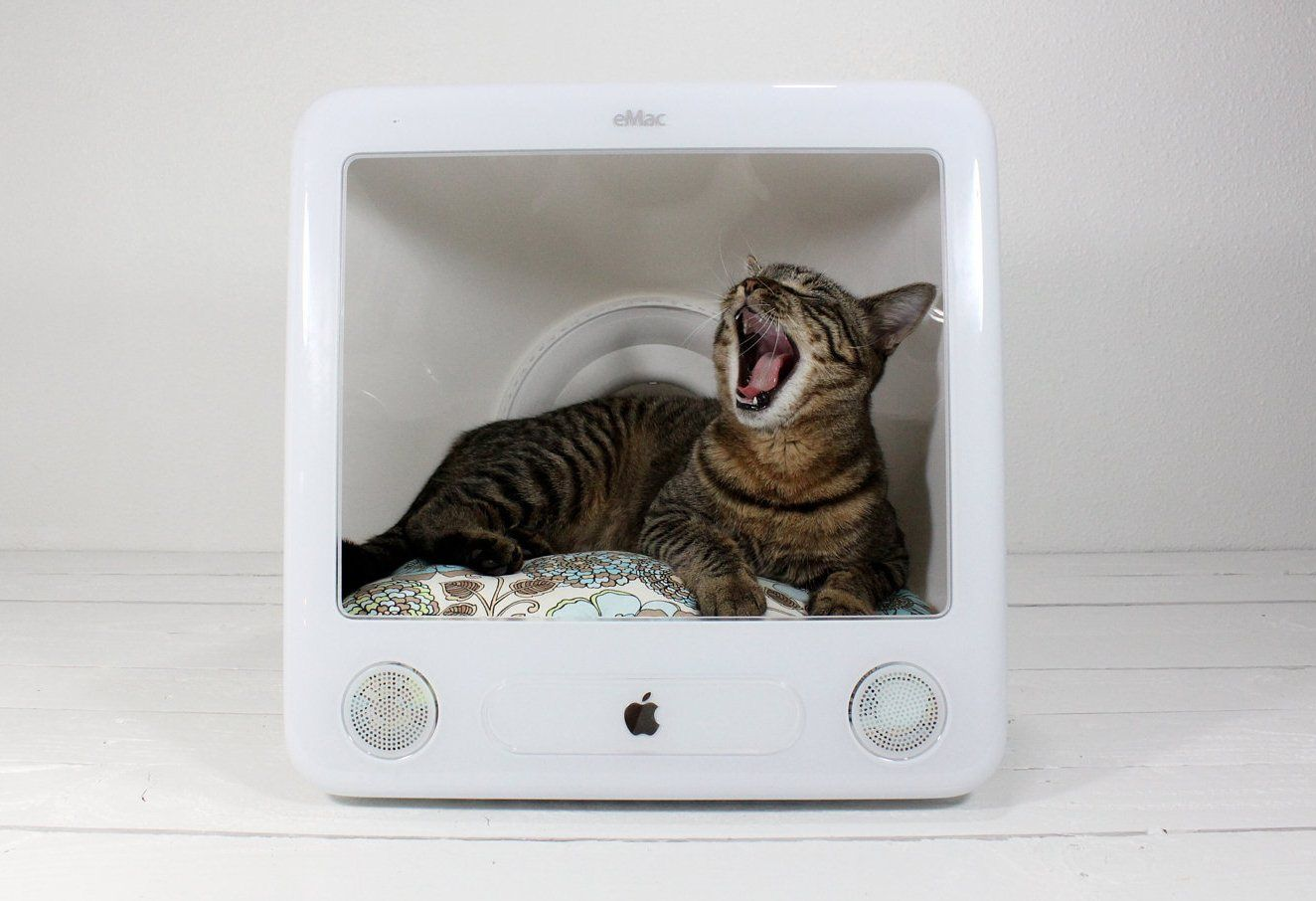 Do it yourself cat beds petoolah cat idea bed diy dailyluther do it yourself cat beds petoolah cat idea bed diy solutioingenieria Gallery