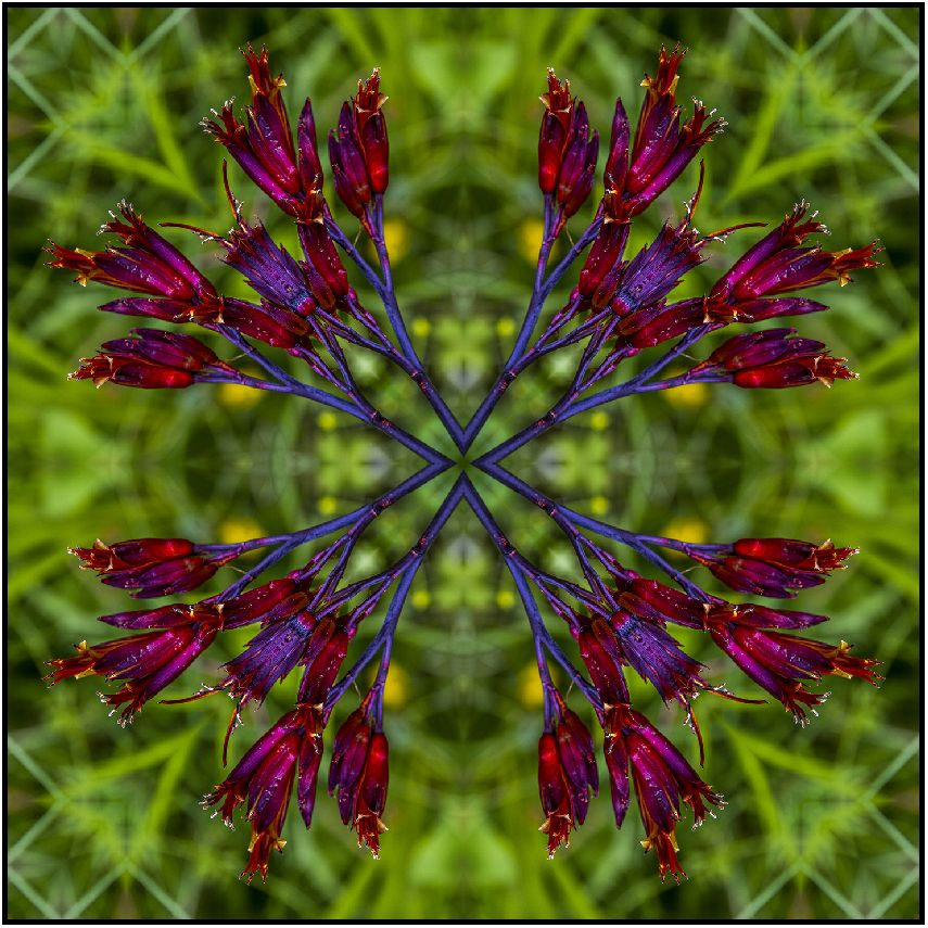 NZ native red flax flower in square mandala design for textiles, fabric and more.