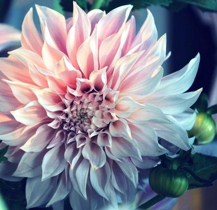 Beautiful Flowers Beautiful Flower Name Photo Image Most