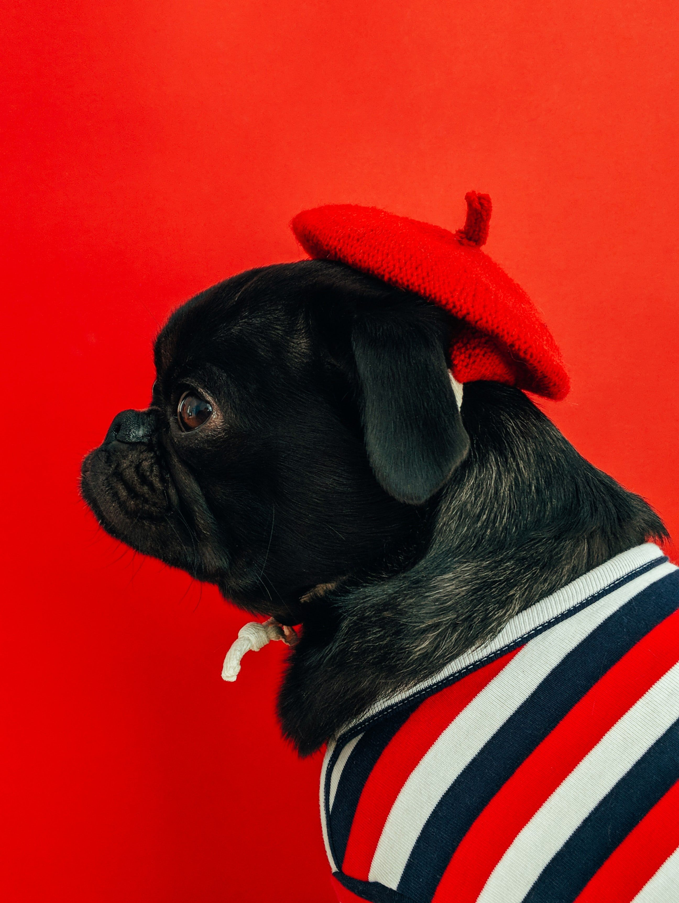 Best 100+ Dog Images Download Free Pictures on Unsplash