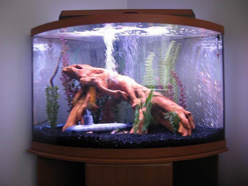100 gallon corner aquarium aquarium ideas pinterest for 100 gallon fish tanks