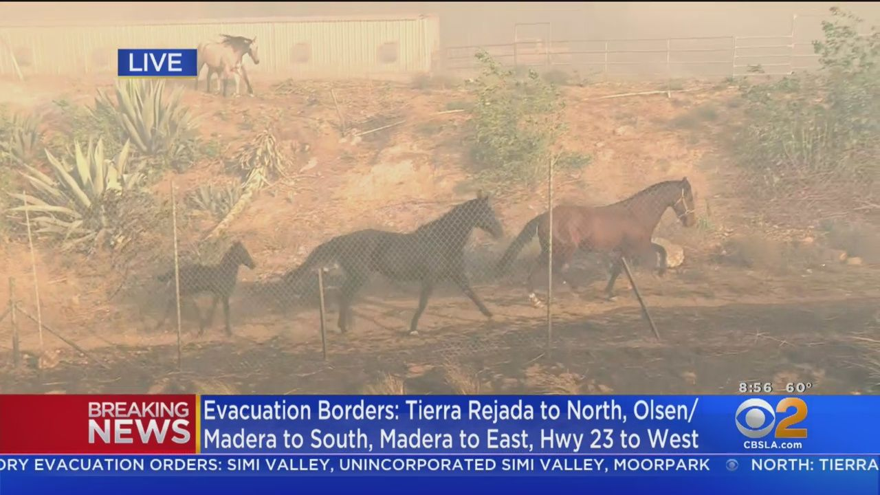 Horses tried to run to safety as the Easy Fire exploded in