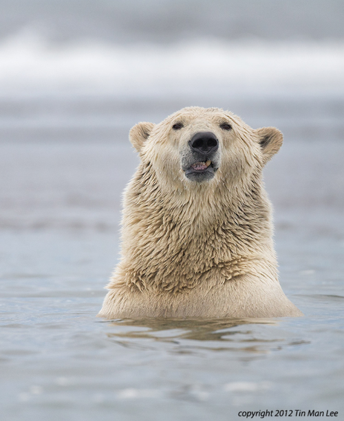 """Nature Madness 