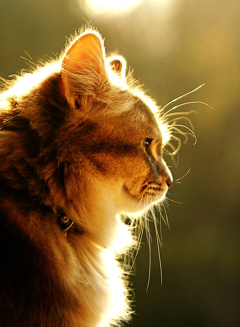 Cat Wallpaper Cat And Dog Memes Cute Cats And Dogs Cats
