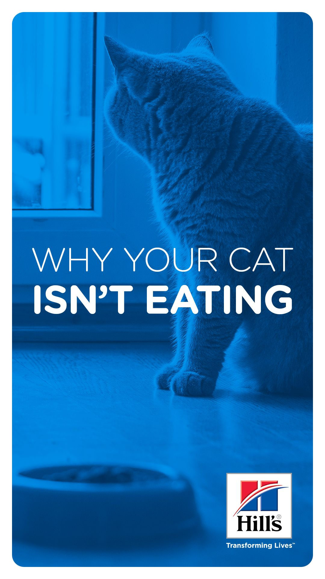 Cat Not Eating How You Can Help Hill S Pet Cats Cat Nutrition Cat Health Problems