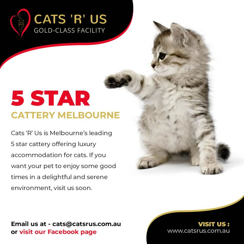 Looking for 5 Star Cattery in Melbourne then contact