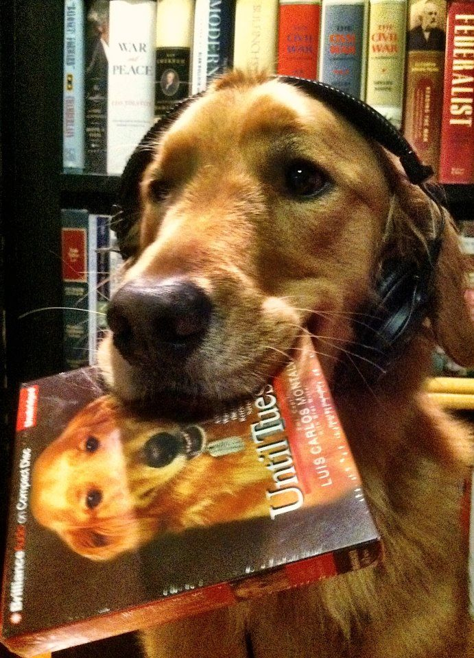 Until Tuesday Audiobook Fun Audio Images Tuesday Service Dogs