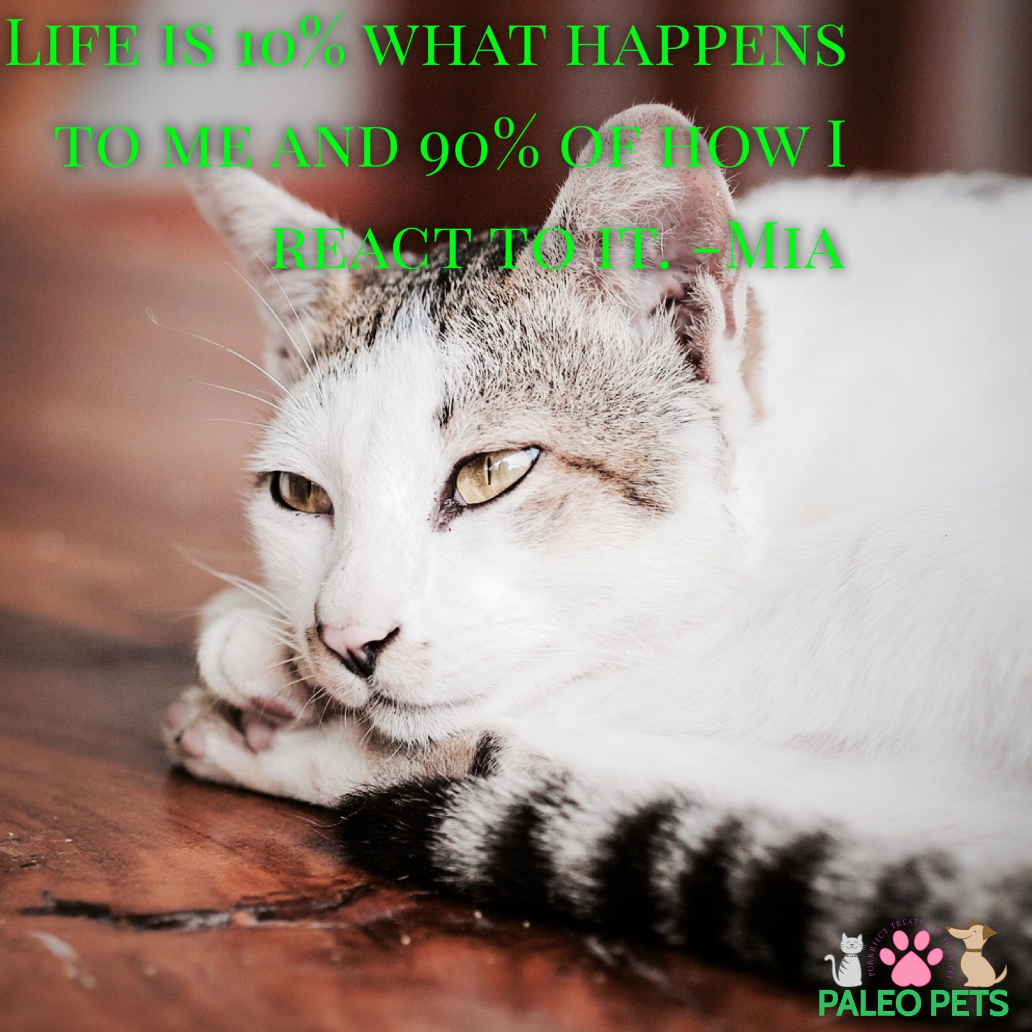 Quotes About Cats Life Is How You React To Itcats Pets Quotes Paleopets Click