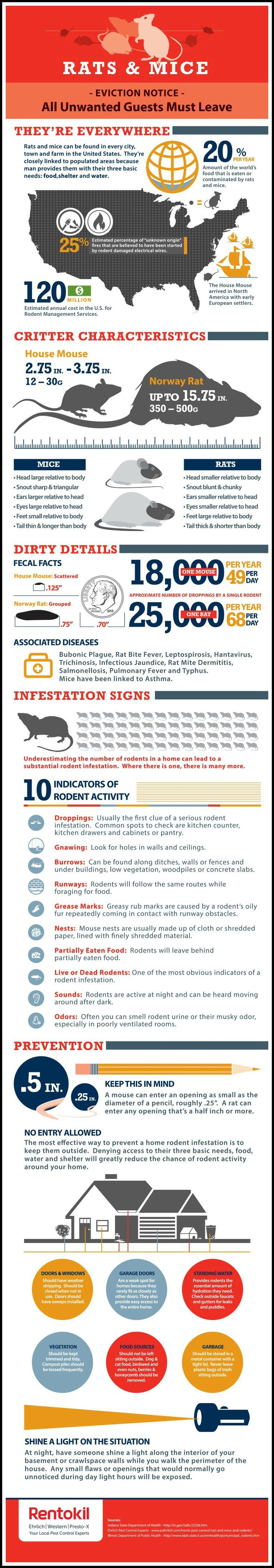 Rats And Mice Infographic Pest Control Termite Control Mouse Rat