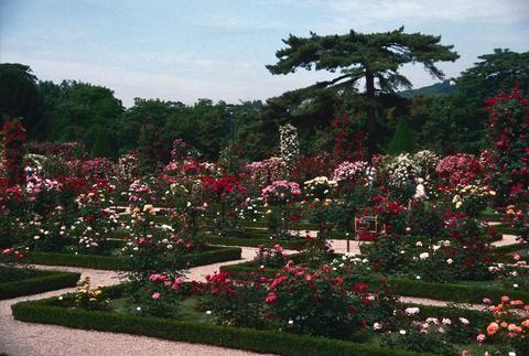 Rose Garden Europe 1502 1131 Gardens Europe France