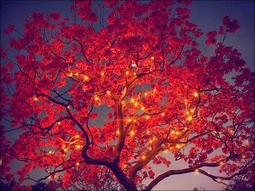 Autumn Wallpaper Autumn Blossom Trees Cherry Blossom Tree Beautiful Tree