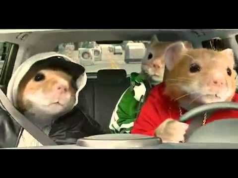 2017 Kia Soul Hamster Commercial Black Sheep Hamsters Video Mp4