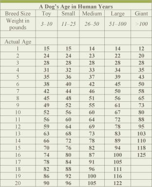 Dog Age Chart By Size Veterinary Nutrition Essentials