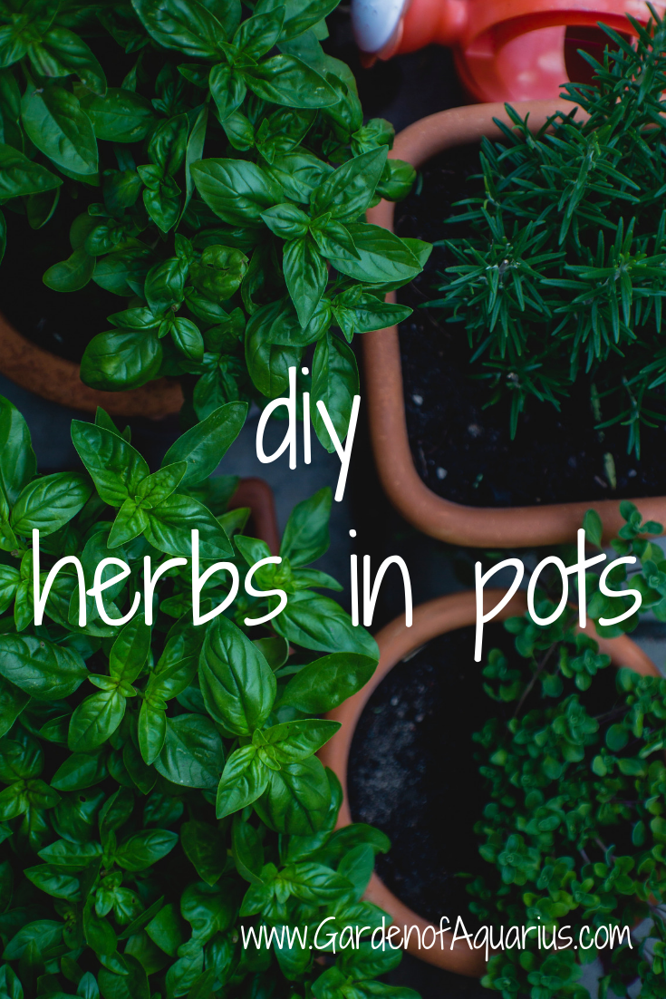 Diy Growing Herbs In Pots Tutorial With Companion 400 x 300