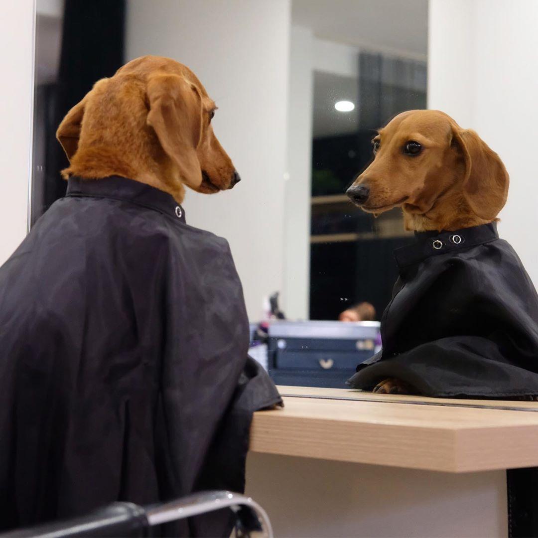 Dachshund Dog Fashion Dachshund Fashion Pet Fashion Sausage Dog Fashion Weiner Dog Fashion Wiener Dog Fashion Miniature In 2020 Dachshund Doggie Style Dachshund Lovers