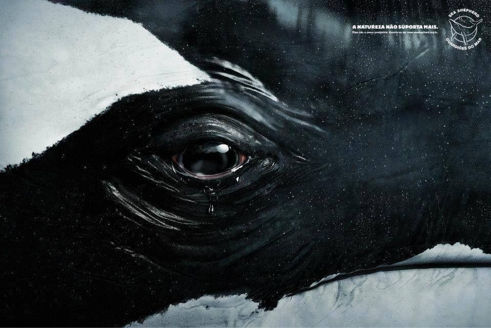Killer Whales Orca - Mind42