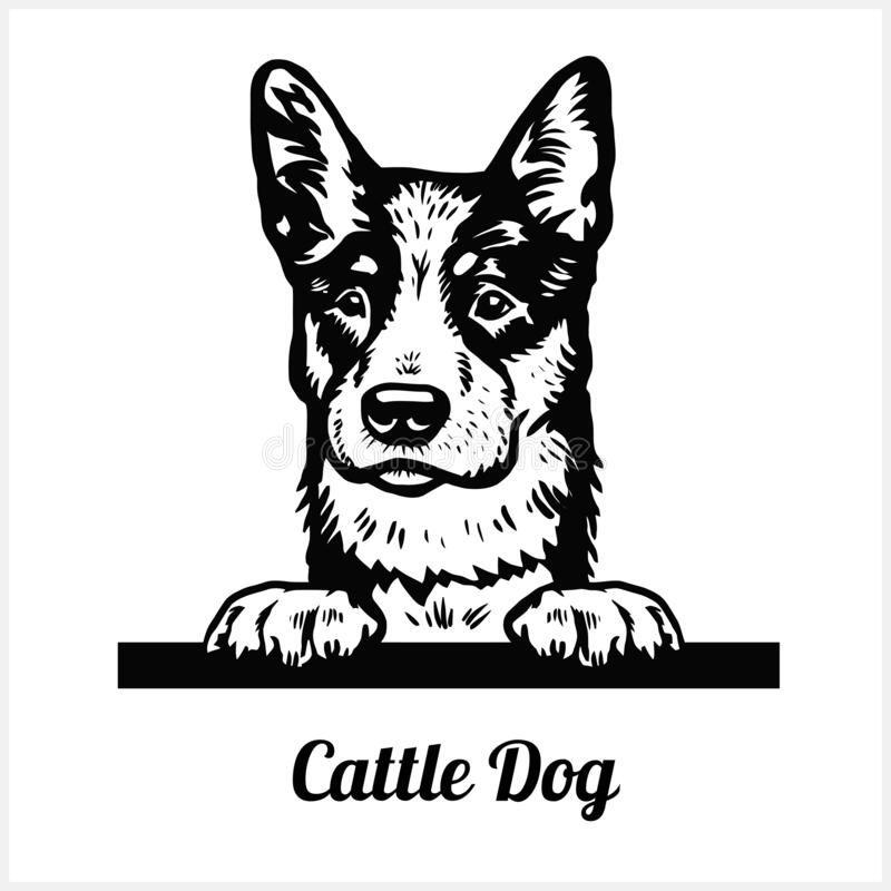 Cattle Dog - Peeking Dogs - Breed Face Head Isolat