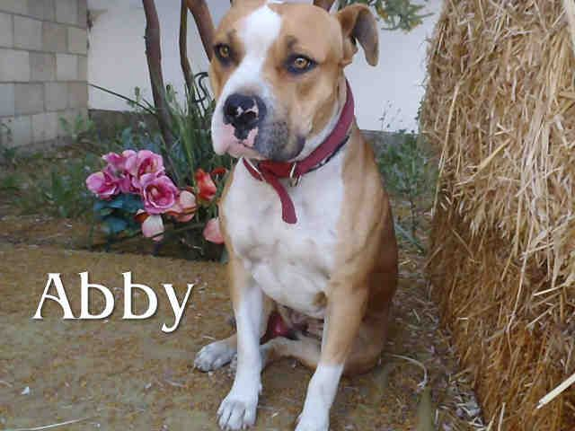 Abby Id A1288355 Has 1 Day S Left To Live Dog Adoption