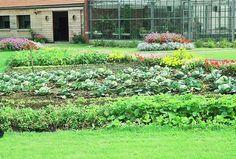 Les erreurs à éviter dans l'organisation du potager // http://www.deco.fr/jardin-jardinage/potager-legume/actualite-504506-erreurs-eviter-organisation-potager.html