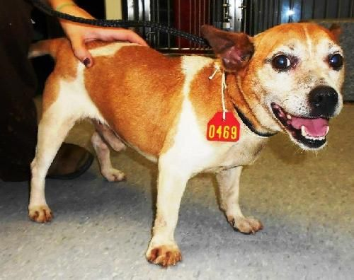 Adopt Sammie On Dogs Terrier Dogs Rescue Dogs