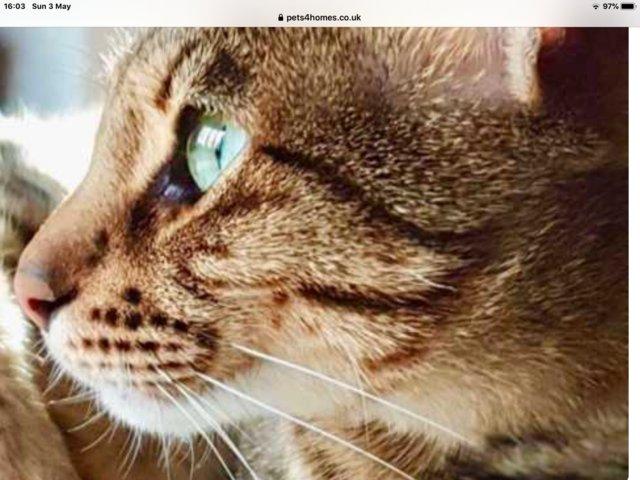 Pin On Precious Pups And Kitties