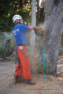 be5d3eeeed6748b8dd40f95686d5c01e - Edgar's Gardening And Tree Service