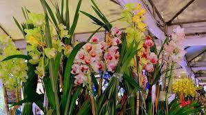 Resultado de imagem para holambra flores
