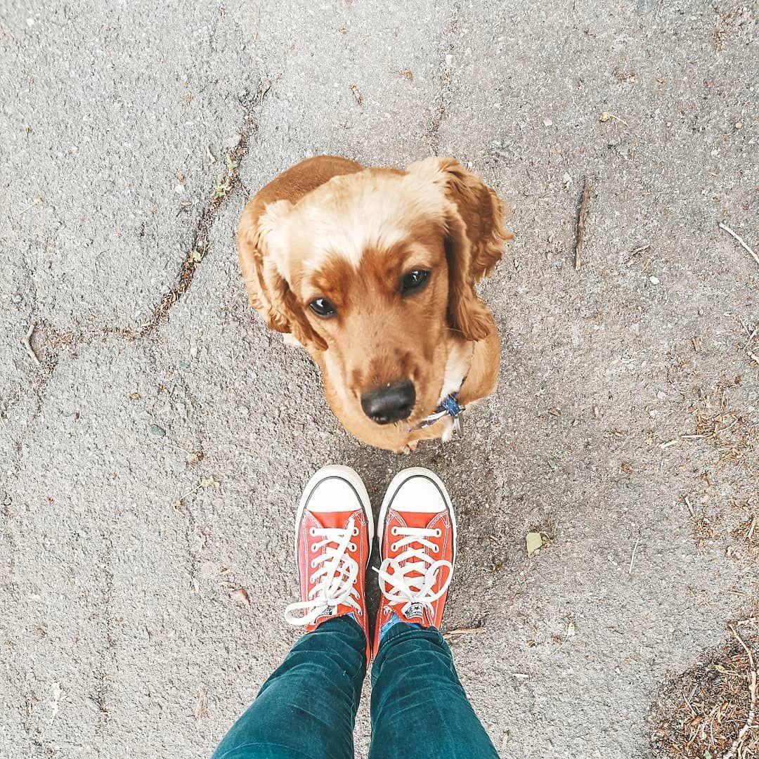 инстаграмм фото с собакой (с изображениями) | Идеи для фото
