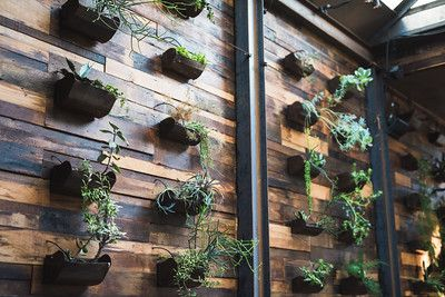 The dramatic succulent wall at Brooklyn Winery makes for an incredibly memorable wedding.